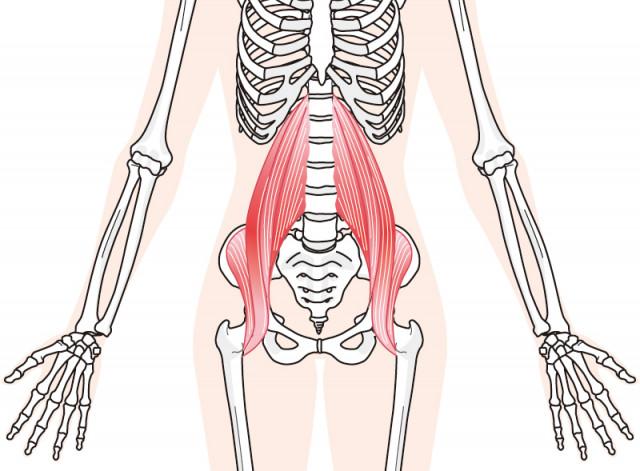 お腹の奥の筋肉